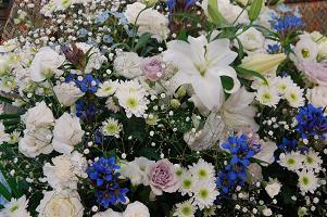 花ブルー.JPG